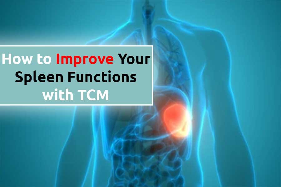 How to Improve Your Spleen Functions with TCM