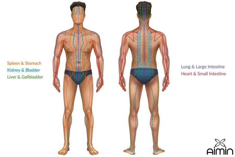 Human Body Acupressure Points