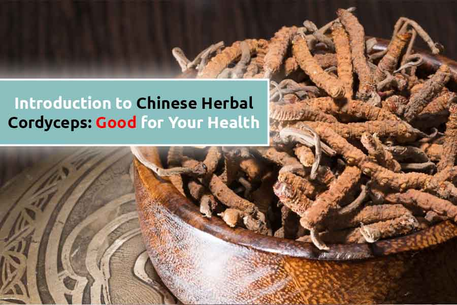 Introduction to Chinese Herbal Cordyceps: Good for Your Health